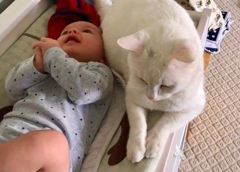 From Shelter Cat to Babysitter
