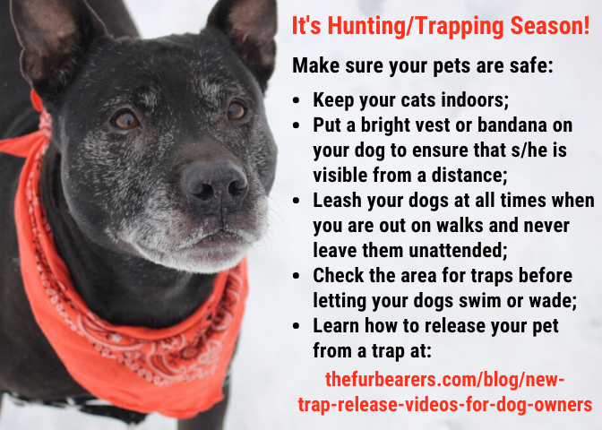 Safety Tips for Hunting/Trapping Season