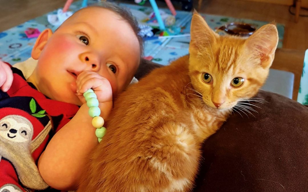Kitten & Baby Brothers Will Grow Up Together