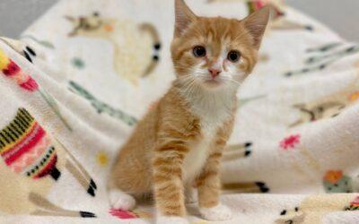 Pumpkin – Adopted!